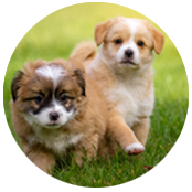 crea sito web allevamento cani