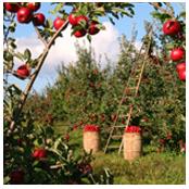 sito web per azienda agricola6