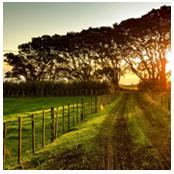 sito web per azienda agricola7